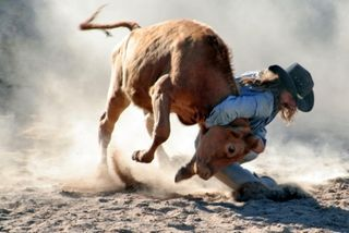 Rodeo-Steer_wrestling