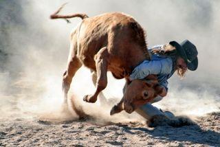 Rodeo-Steer_wrestling